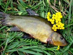 Рыбалка на линя
